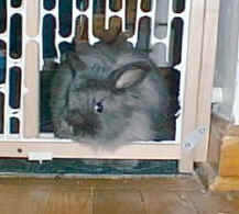 fluffy_gate.jpg (15858 bytes)